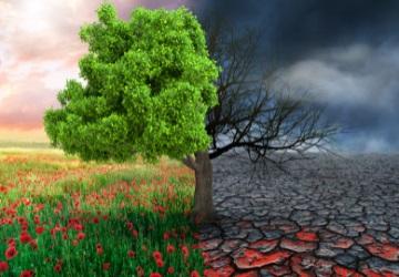 COP26 Tree Climate Change